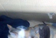 merawat anak kucing baru lahir