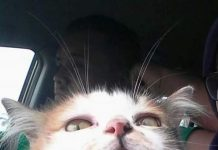 mengatasi kucing stress