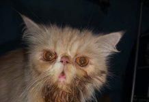 kucing mengeluarkan banyak liur