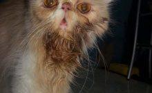 √ Download Suara Kucing Lucu Lengkap MP3 - Binatang Peliharaan