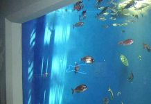 gambar daftar harga akuarium