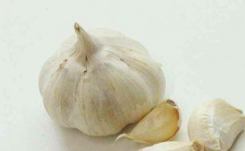 Bawang putih untuk burung kicau