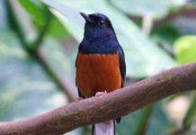 daftar burung dilindungi terbaru 2018
