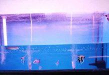 ukuran aquarium ikan hias