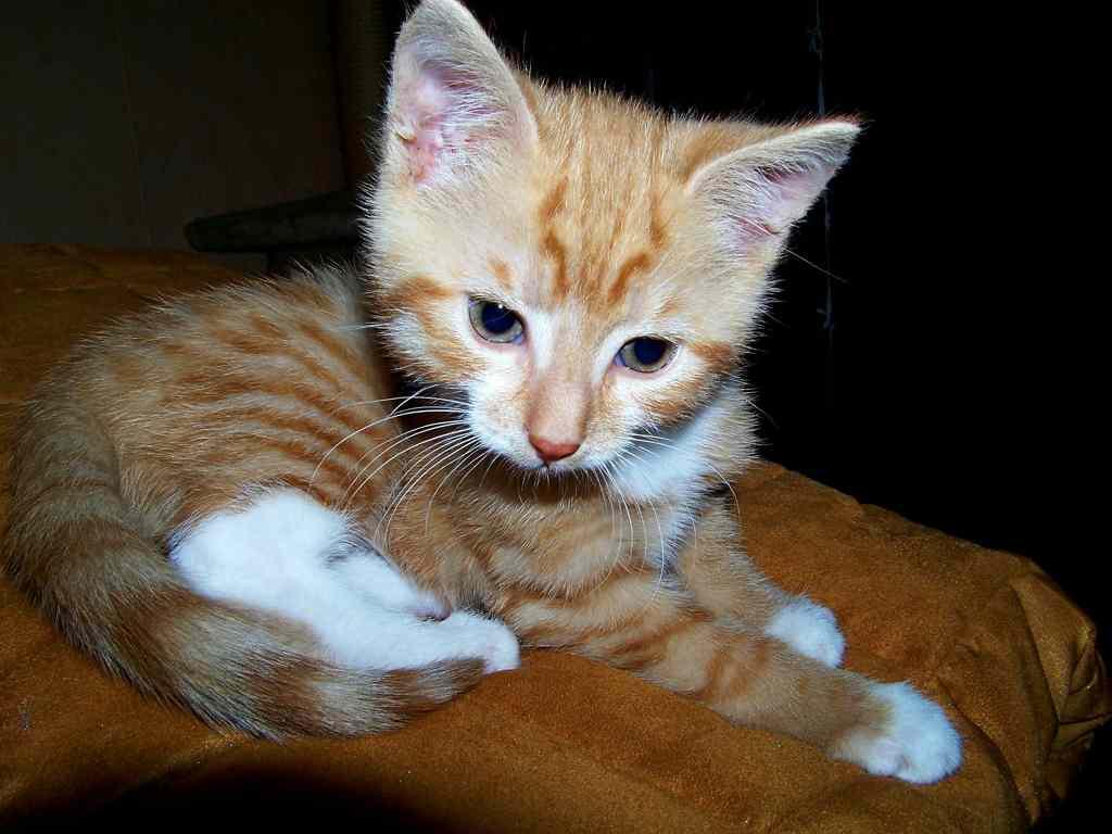 nama-kucing-populer